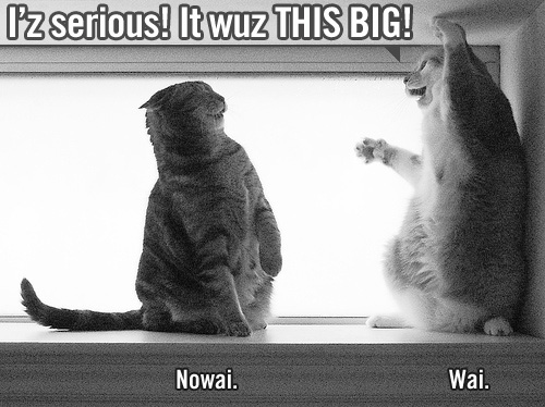 Lolcats: I'z serious! It wuz THIS BIG! - Nowai. - Wai.